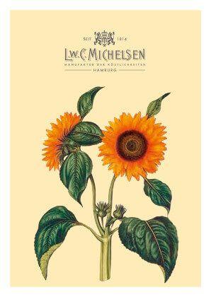 Sonnenblumen-Honig