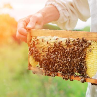 """""""Honig ist eine wertvolle Gabe"""""""